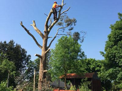 emergency tree felling
