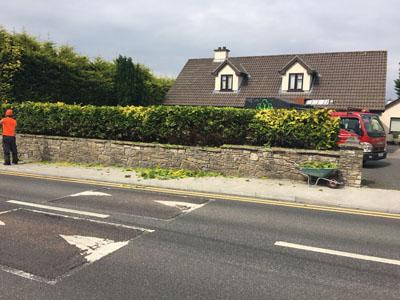 hedge maintenance services