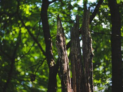 tree survey assessment services